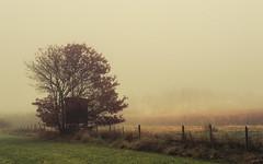 Fog in the Fields (Netsrak) Tags: baum bäume eifel europa europe herbst landschaft natur nebel wald autumn fall fog landscape mist nature woods tree trees singletree