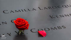 Fallen (allentimothy1947) Tags: 911memorial newyorkstate newyorkcity 17th aniversery 911 memorial new york state sept 11 september coombs engraved fallen flower honor city peace petel picked place red rose world trade center