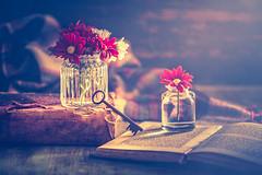 At home (Ro Cafe) Tags: nikkor105mmf28 sonya7iii stilllife winter athome darkmood flowers oldbooks oldkey setup vases homely naturallight textured