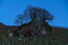 Blaue Stunde am Dasenstein (KaAuenwasser) Tags: blauestunde dasenstein schwarzwald bäume abend blau himmel reben wein pflanzen dunkelheit felsen stein