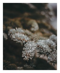 DSC_0059-1 (PhotoByNelson) Tags: nikon niagara ontario canada nature welland beautiful creative lightroom photoshop photography photo seasons winter d5600 bokeh
