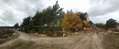 haarlerbergloop 10 km (55)