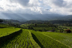 bali rice fields (Greg Rohan) Tags: nikon nikkor asia landscape countryside country palmtrees trees outdoor nature sunrays ricefield 2018 bali indonesia d750 rice fields green clouds sky rays mountains