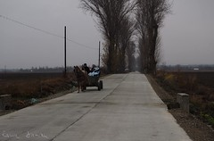 322/365 (ralux2004) Tags: 365daysfrom2018 autumn november road people horse cart