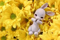 212/365 Bunny Bouquet (AluminumDryad) Tags: cocoriang tobi anthrobjd tinybjd bjd balljointeddoll doll resin bunny rabbit daisies flowers yellow grocerystorebouquet kroger photoaday dailypicture project365