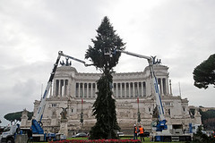 Rome Gets a New Christmas Tree, Sponsored by Netflix. Will It Weather Social Media? (psbsve) Tags: portrait summer park people outdoor travel panorama sunrise art city town monument landscape mountains sunlight wildlife pets sunset field natural happy curious entertainment party festival dance woman pretty sport popular kid children baby female cute little girl adorable lovely beautiful nice innocent cool dress fashion playing model smiling fun funny family lifestyle posing few years niña mujer hermosa vestido modelo princesa foto guanare venezuela parque amanecer monumento paisaje fiesta