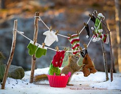 laundry, baking, then gift wrapping..so much to do! (Nancy Rose) Tags: clothesline nr20170306canon eos 6d8260 squirrel miniature winter