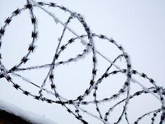 Rime (Spanifer) Tags: rime winter cold zúzmara tél hideg