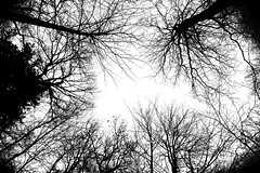 For one minute, walk outside, stand there, in silence, look up at the sky, and contemplate how amazing life is - Rhonda Byrne (A Great Capture) Tags: agreatcapture agc wwwagreatcapturecom adjm ash2276 ashleylduffus ald mobilejay jamesmitchell on ontario canada canadian photographer northamerica rhonda byrne sky trees bw blackandwhite nature life amazing lookup outside standthere up quotes sayings rhondabyrne kingcity kingtownship monocrhome canon eos 6d mark ii 2470mm digital dslr lens natur naturaleza natura naturephotography naturethroughthelens outdoor outdoors woods tree arbre forest wald árvore branch branches