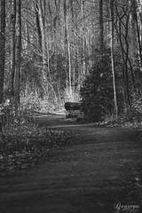 Footpath (Doorega) Tags: 3200 doorega nikon3200 brown daylight december footpath forest leaves mood nature tamron tree wald way winter black white schwarz weis