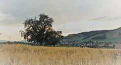 DSC05702 (ursrüegsegger) Tags: linden juli august getreideernte bauernhöfe landschaft regenbogen