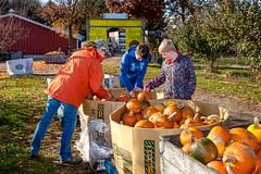 Pumpkin_Patch_11102018-41 (VisitChampaignCountyPhotography) Tags: curtisorchard pumpkins