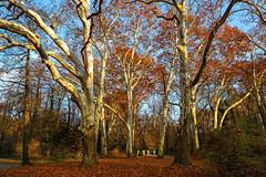 Őszi óriások (Kunpusztai) Tags: alcsút canon 2470f28l ősz táj kastély park
