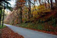 The road into the woods (annalisabianchetti) Tags: road strada wood bosco autumn autunno colors colori travel beautiful valsabbia italy trees alberi