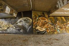 Otter and Hoopoe (JuliSonne) Tags: streetart urbanekunst mauer wall graffiti colors scene urban pasteup stencil street wuam karlsruhe otter wiedehopf hoopoe underthebridge