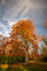 """autumns colours at Haddo House gardens, fine art, near Methlick, Aberdeenshire, Scotland (grumpybaldprof) Tags: """"haddohouse"""" gardens park """"williamadam"""" 1732 georgian gordons aberdeenshire scotland """"georgegordon"""" """"1stearlofaberdeen"""" """"lordchancellor"""" """"maternityhospital"""" methlick ellon tarves house chateau """"marquessofaberdeen"""" """"500years"""" """"palladinstyle"""" """"georgehamiltongordon"""" """"4thearlofaberdeen"""" """"britishprimeminister"""" """"1852–1855"""" """"burnofkelly"""" trees lake loch pond water wood forest autumn colours """"fineart"""" ethereal striking artistic interpretation impressionist stylistic style contrast shadow bright dark black white illuminated colour colourful """"wideangle"""" ultrawide canon 7d """"canon7d"""" sigma 1020 1020mm f456 """"sigma1020mmf456dchsm"""""""