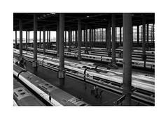 Atocha Train Station XV (BLANCA GOMEZ) Tags: spain mad madrid bw blackwhite arquitectura architecture light shadows silhouettes shapes textures lines patterns atochastation atochatrainstation estaciondetren estaciondetrendeatocha railwaystation train oldstation trains greenhouse atocha