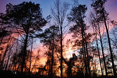 Wooded Silhouette At Sunset. (dccradio) Tags: lumberton nc northcarolina robesoncounty outdoor outdoors outside nature natural march spring springtime sunday sundayevening sundaynight evening silhouette tree trees treebranch branch branches treebranches treelimb treelimbs sky colorful colorfulsky sunset sunsetsky clouds pinkclouds bluesky nikon d40 dslr scenic woods wooded forest beauty beautiful pretty landscape