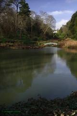 3KA07598a_C (Kernowfile) Tags: pentax cornwall cornish lake water reflection green tree bush island house valley garden shadows sky clouds trebahgarden themallardpool gunnera path people