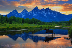 Sunset Moose and the Grand Tetons, Grand Teton National Park in Wyoming (@randalljhodges) Tags: sunset moose schwabackerslanding grandtetons grandtetonnationalpark wyoming reflection water beaverponds travel scenic destination landscape unitedstates usa