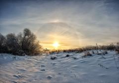 *** (Woodmen19) Tags: russia kirovregion 2018 december sunrise morning daybreak sky clouds light sunlight backlight halo nature flora plants landscape meadow sun snow tree