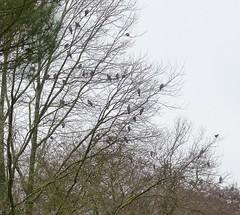 """Cagnotte, Landes: c'est tous les jours la Saint Luc et """"lou gran truc"""" chez nous (Marie-Hélène Cingal) Tags: sudouest france 40 landes aquitaine nouvelleaquitaine paysdorthe cagnotte palombes"""