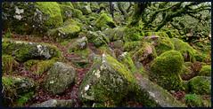 Among The Rocks. (curly42) Tags: wistmanswood dartmoornationalpark devon rocks moss dartmoor