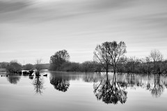 Contemplated high water (frank_w_aus_l) Tags: natur nature monochrome dorsten lippe germany reflection mirror water river sky longexposure nikon nikkor d800 2470