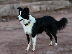 Black and White (muntsa-joan-color) Tags: dog white black perro compañia friend amigo fiel faithful leal