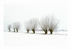 December 23rd - Fuji Superia 400 exp* (magnus.joensson) Tags: sweden swedish skåne december fujica st801 carl zeiss jenna ddr 50mm fuji superia 400 exp c41 snow winter willow tree