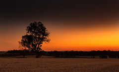 Barossa sunset (dmunro100) Tags: barossa southaustralia summer sunset dusk tree country