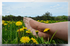 V pampeliškách / In dandelions  (34) (Merman cvičky) Tags: balletslippers ballettschläppchen ballet slipper ballerinas slippers schläppchen piškoty cvičky ballettschuhe ballettschuh