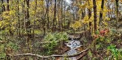 8R9A4995-97Ptazl1scTBbLGERkR (ultravivid imaging) Tags: ultravividimaging ultra vivid imaging ultravivid colorful canon canon5dm3 leaves autumn autumncolors creek stream landscape twilight trees pennsylvania pa fall panoramic forest
