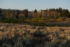 Blacktail Plateau (Samuel Raison) Tags: aube paysage landscape yellowstone yellowstonenationalpark nikon nikond800 nikon282470mmafsg