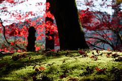 Autumn (kat-taka) Tags: autumn leaves nature glass green tree japan red nikkor