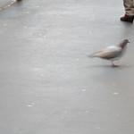 standing / walking thumbnail