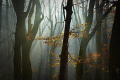(Nikola Ostrun) Tags: forest tree trees woodland bokeh misty autumncolors details branch sunrays sun sunrise sunlight contrast background