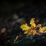 Autumn Touch of Light thumbnail
