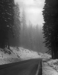 northwest snow on 4x5 film (Garrett Meyers) Tags: graflexseriesd4x5 garrettmeyers garrett meyers largeformat landscape lf graflex graflex4x5 outdoors snow blackandwhitefilm film filmphotographer