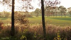 Mooi herfstgezicht vanaf de  Slaperdijk (Cajaflez) Tags: herfst herbst autun autumn light licht trees bomen pluimen slaperdijk renswouce ngc coth5