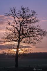 Early morning sky (katrinchen59) Tags: tree sky morningsky sunrise sunrisephotography januari landscape landscapephotography nature naturephotography morninglight morningdawn baum morngenhimmel morgenlicht morgendämmerung sonnenaufgang landschaftsfotografie natur boom landschap natuur ochtenlicht zonsopkomst