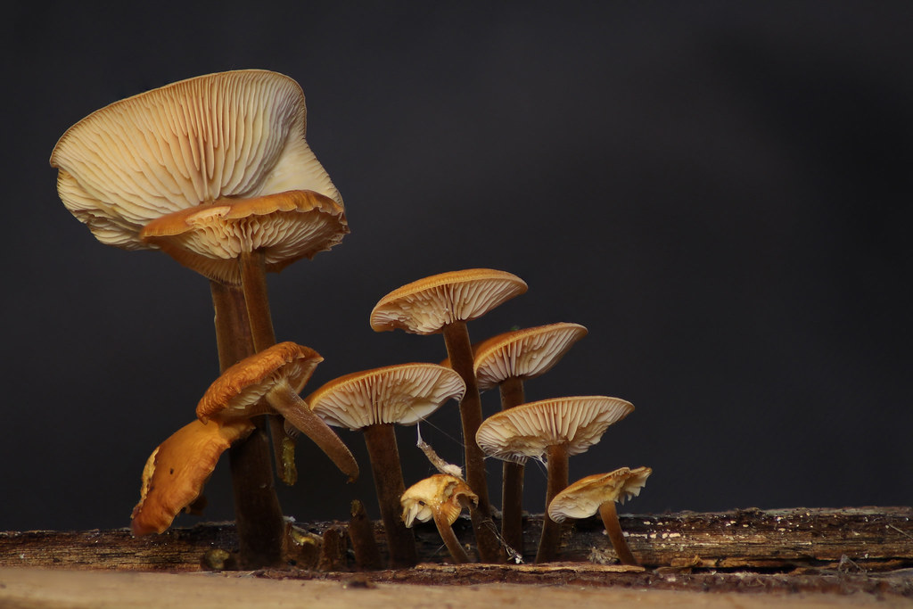 The World's Best Photos of growing and mushrooms - Flickr