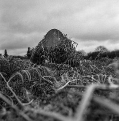 Overgrown (Richie Rue) Tags: cemetery bradford undercliffe yorkshire graveyard headstone bracken mamiya c220 foma fomapan400 championpromicrol ishootfilm istillshootfilm filmsnotdead