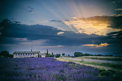 A New Beginning (marypink) Tags: provenza provence francia france valensole lavanda lavander sky sunrise alba fields fioritura estate summer nikond800 nikkor1635mmf40 raggi rays clouds