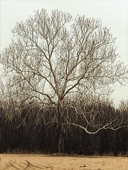 20190117-063142-1 (alnbbates) Tags: january2019 tree sapulpa