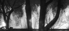 splash (albyn.davis) Tags: blackandwhite contrast art abstract trees fireworks panorama