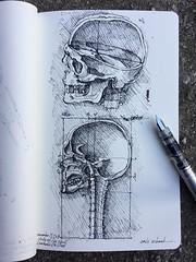 Sunday...funday!!!!  Skull study - Leonardo Da Vinci (schunky_monkey) Tags: fountainpen penandink ink pen practice study spine head skull section body medicalillustration art illustration drawing draw sketchbook sketching sketch artist master leonardodavinci davinci