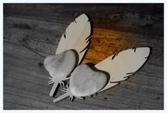 LOVE.....IN EXPLORE (Marie-Laure Larère) Tags: plume coeur explore