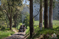 Thirty-Eight (R Class Productions) Tags: steam train puffing billy railway smoke locomotive 262 narrow gauge victorian railways forest pbr 7a