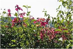 anselmo 94 (beauty of all things) Tags: italien toskana montespertoli anselmo flora flowers blumen